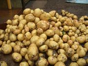 Картофель оптом свежий