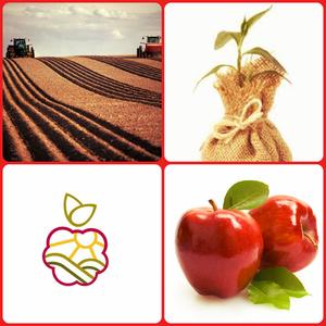 Саженцы плодово-ягодных в Алматы